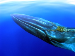 Historia de una ballena