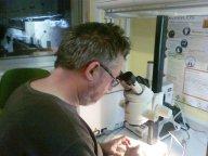Rafa Bañon estudiando un espécimen bajo la lupa.