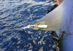 Tiburones marcados