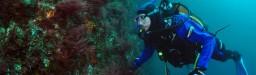 """Documental """"El mar del fin del mundo: marcados para sobrevivir"""""""
