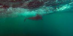 Más sobre ecología de tiburones