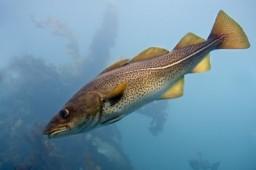 ¿Tienen personalidad los peces?