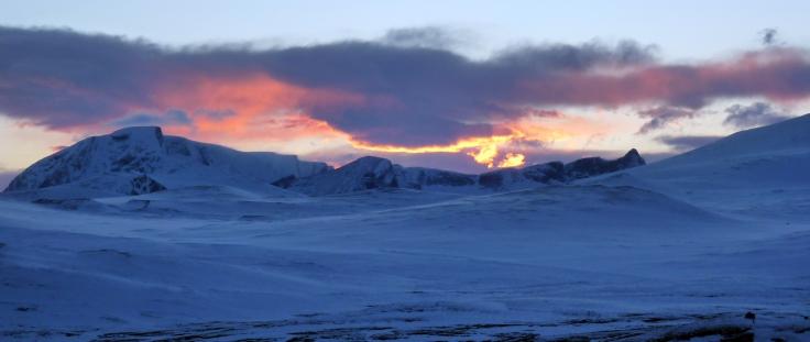 Estepa del Dovrefjell-Sunndalsfjella con el la montaña Snøhettaal fondo (foto: G. Mucientes, BEC)