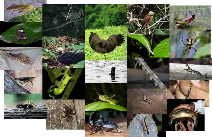 Fauna observada en nuestra visita a Manu (fotos: G. Mucientes / BEC)