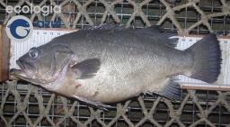 Banco de Galicia (2/3): Presión pesquera
