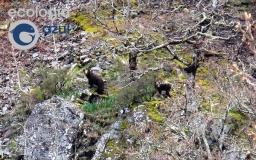 Conservación de grandes carnívoros europeos