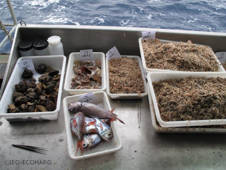 Bandejas de muestras obtenidas en los fondos sedimentarios del Banco de Galicia. Fuente: Alberto Serrano/ECOMARG-IEO